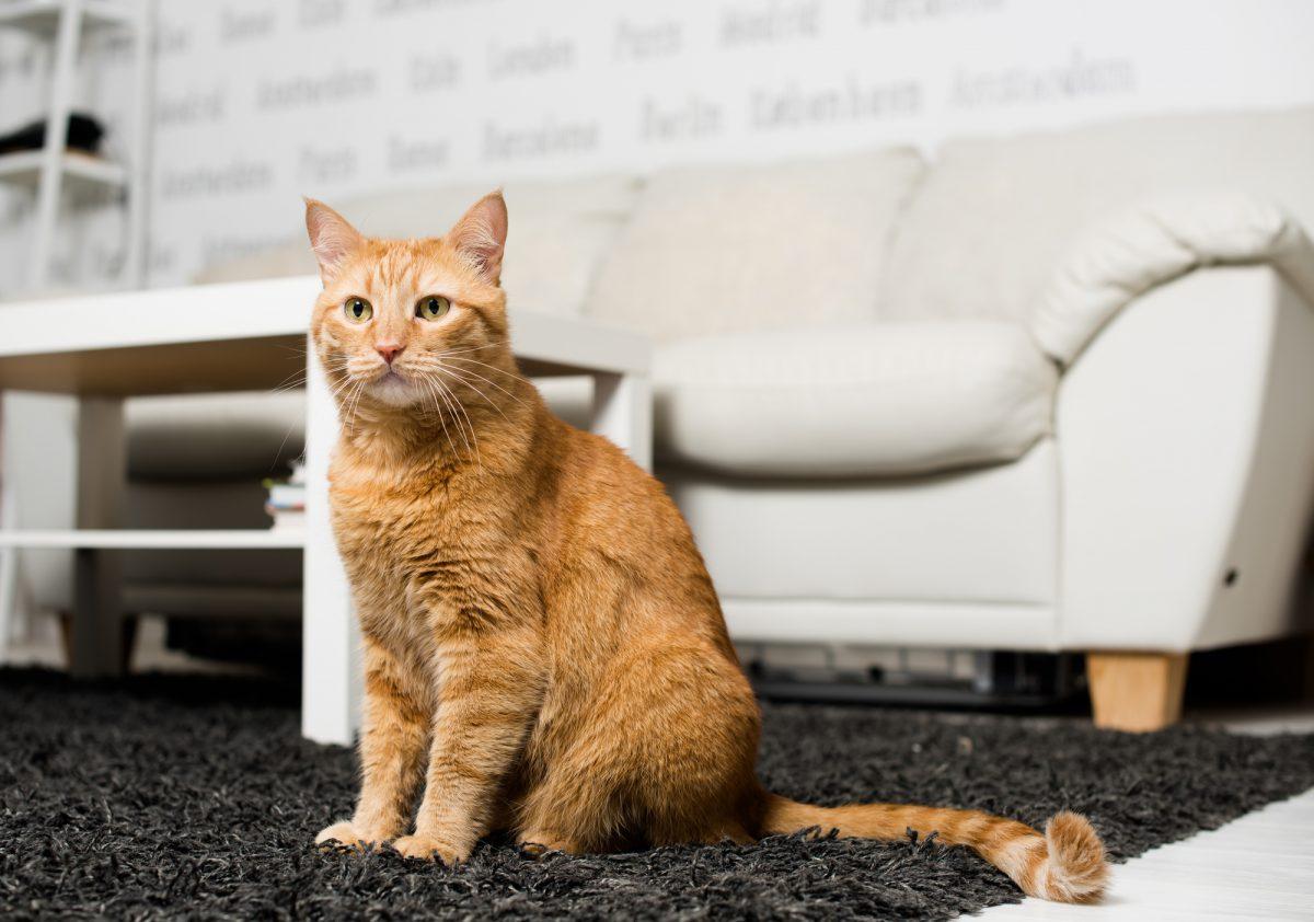 Terytorium kota to jego królestwo.