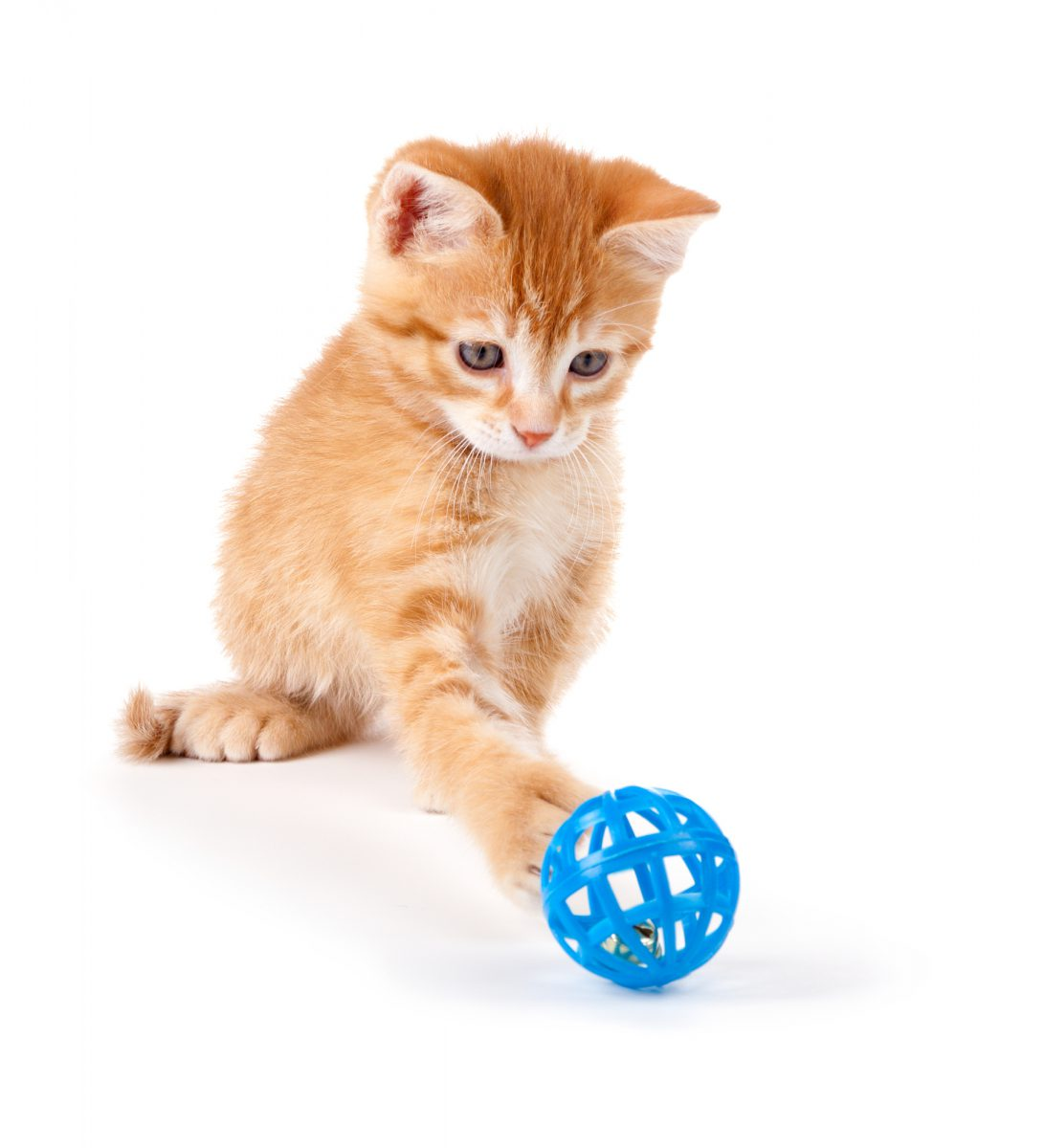 Zabawa z kotem powinna odbywać się kilka razy dziennie.