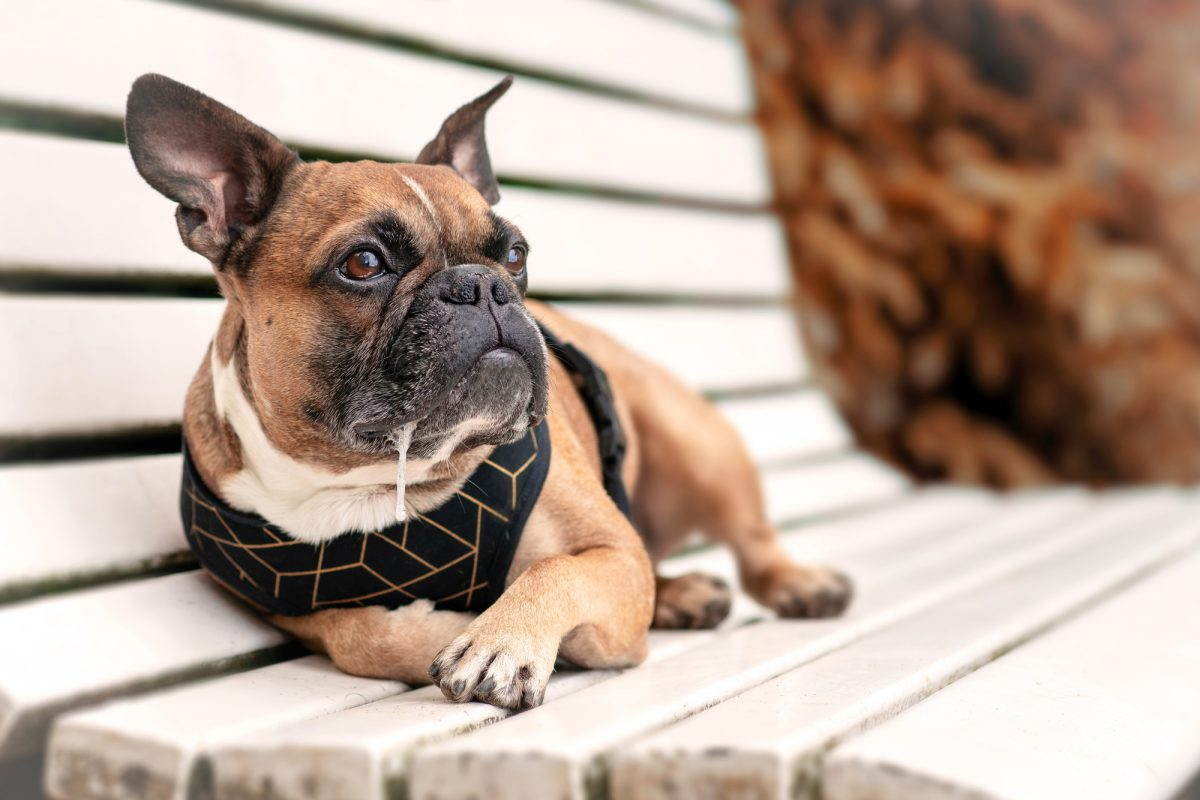 Pies się ślini kiedy zje na przykład coś gorzkiego, co mu nie smakuje.