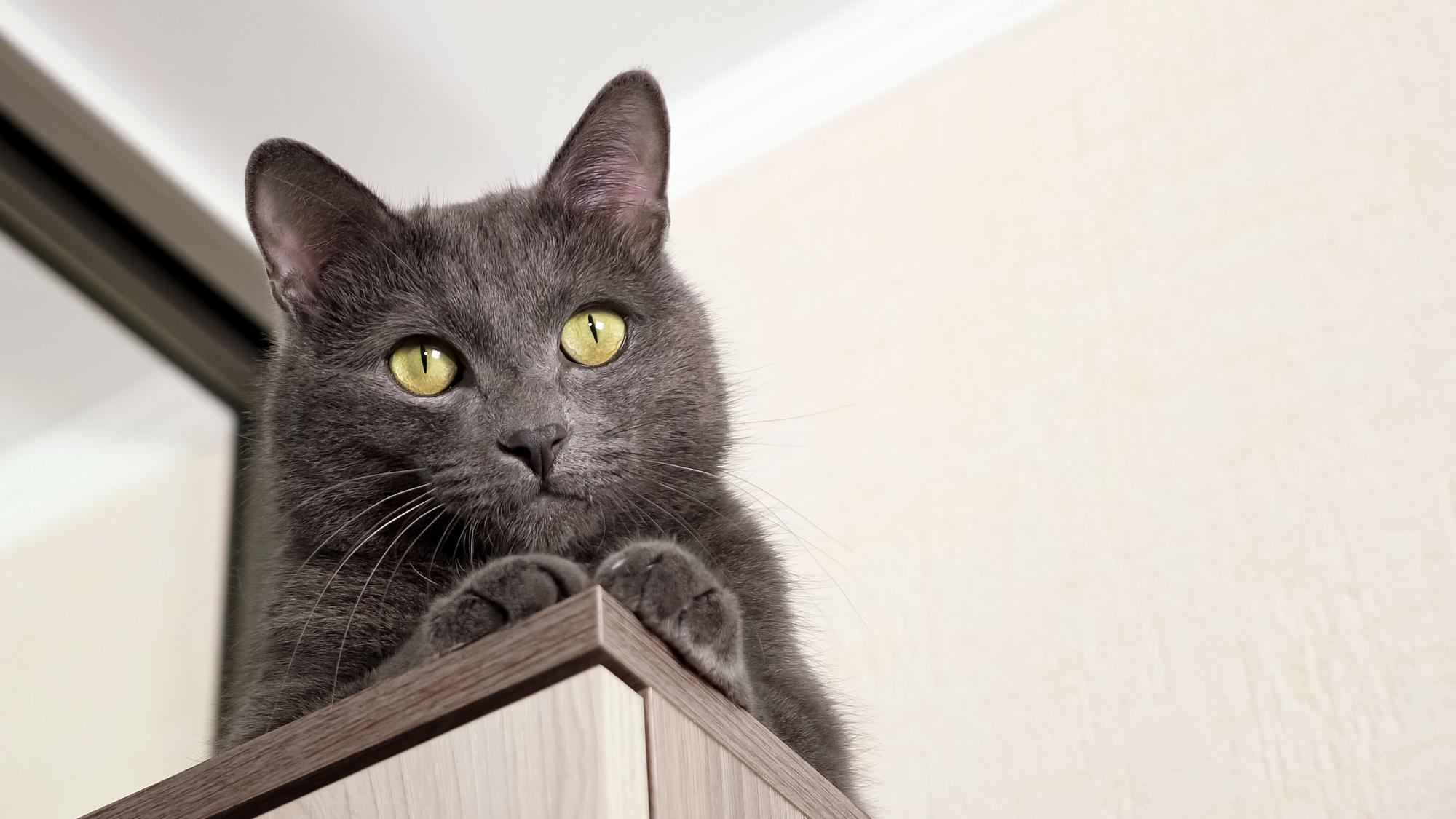 Aby mieszkać z kotem i żyć z nim w zgodzie warto dostosować mieszkanie do jego potrzeb.