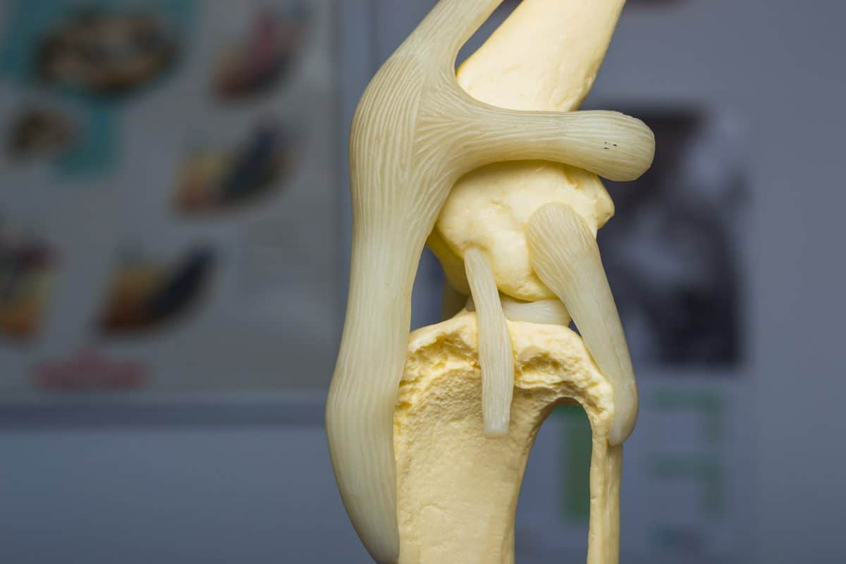 Kości i stawy - warto suplementowac witaminę D, wapń i fosfor.