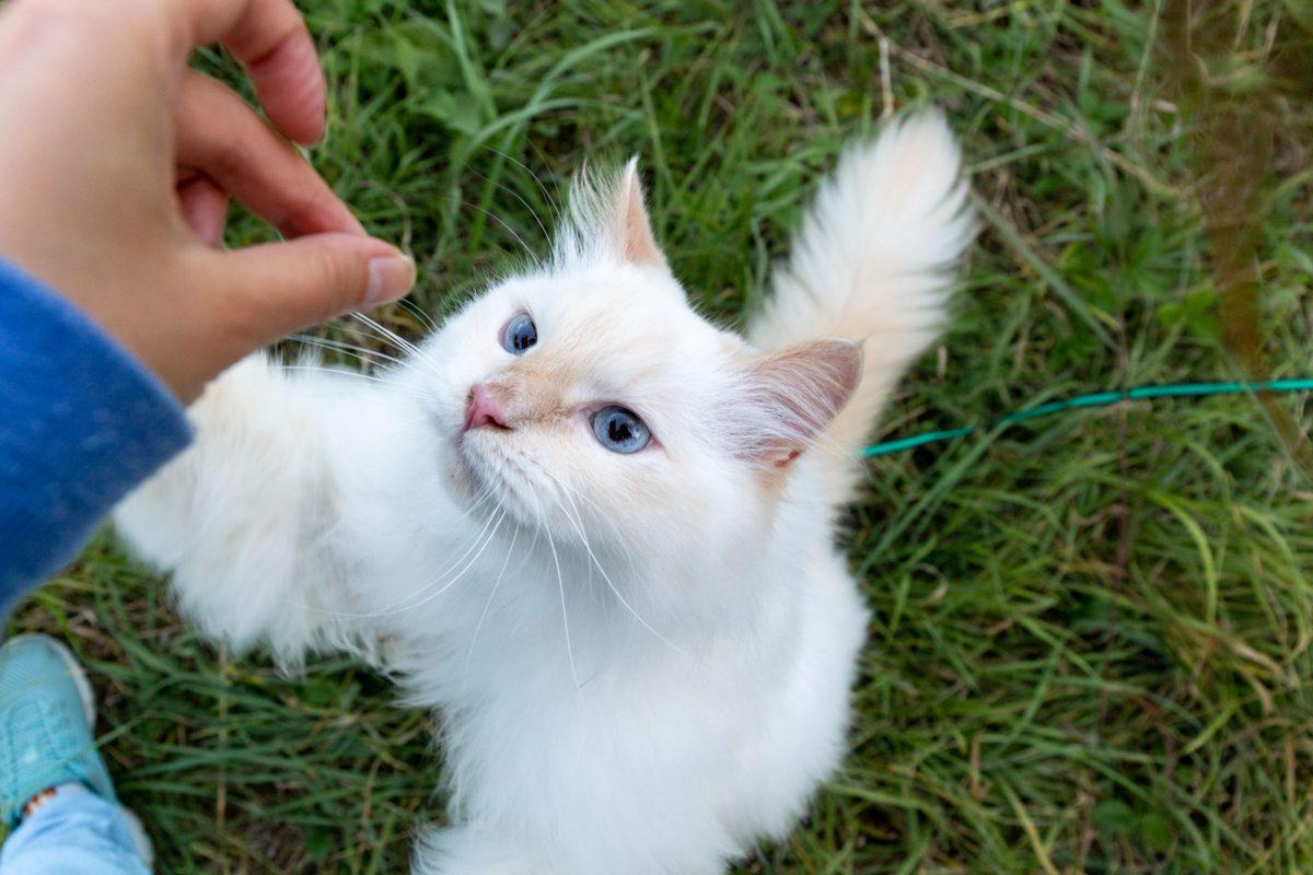 Kocie sztuczki - nauka przez zabawę.