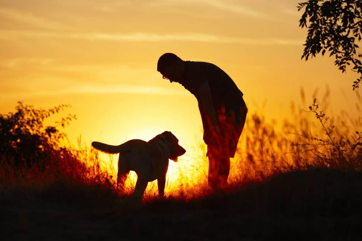 Rola wolontariusza w szkoleniu psów przewodników