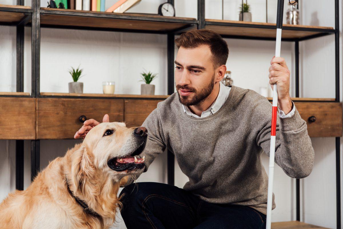 Pies przewodnik jest mądrym i wiernym towarzyszem osoby niewidomej.
