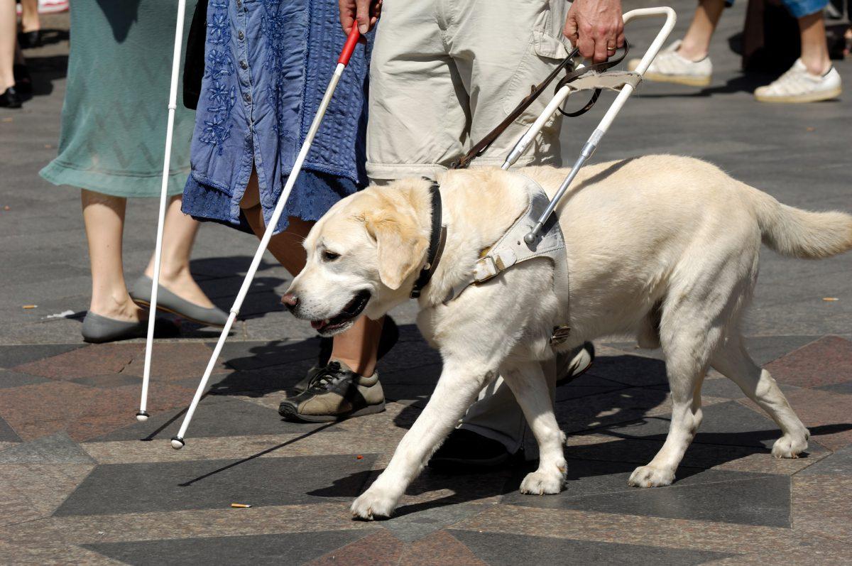 Pies przewodnik - co musi umieć? Jak pomaga człowiekowi?
