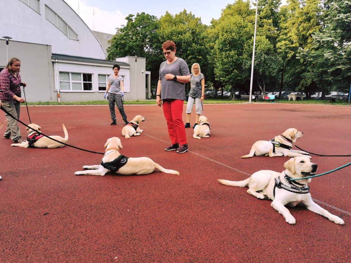Szkolenie psa przewodnika - poszczególne etapy