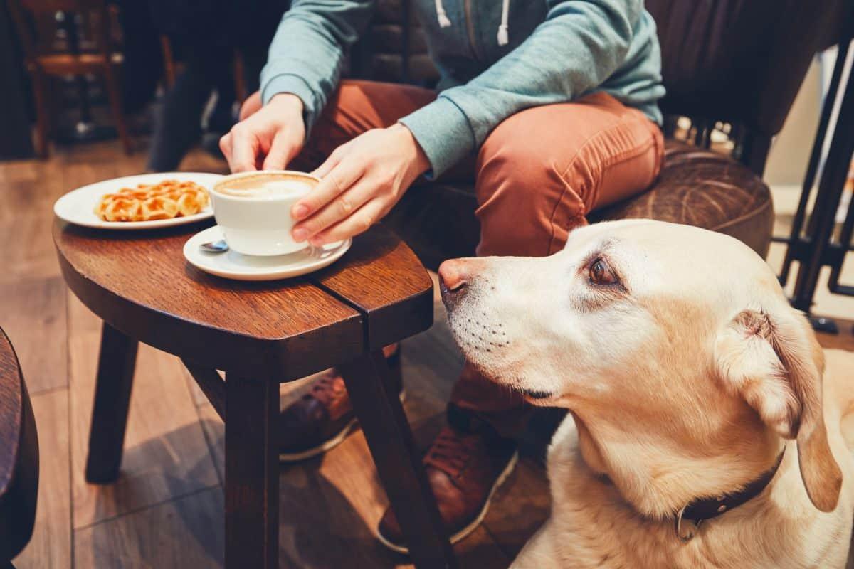 Prawa osoby niewidomej poruszającej się z psem przewodnikiem muszą być respektowane.