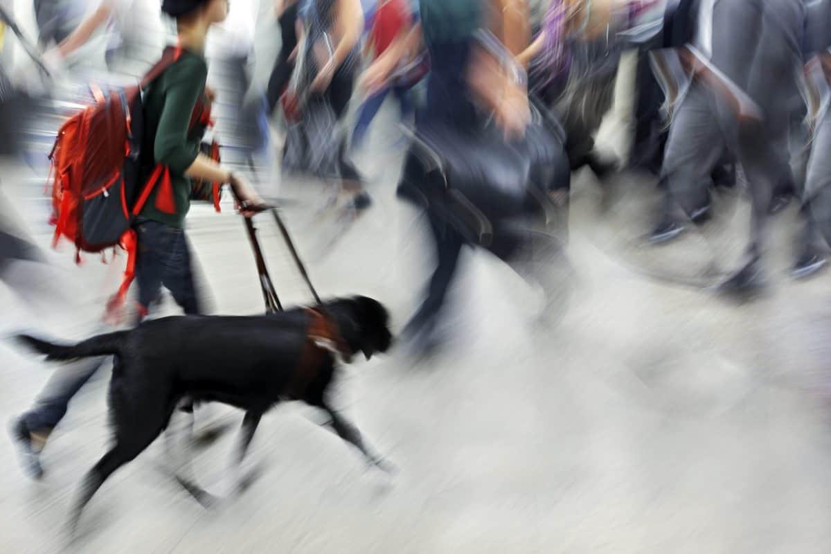 Pies przewodnik i jego człowiek