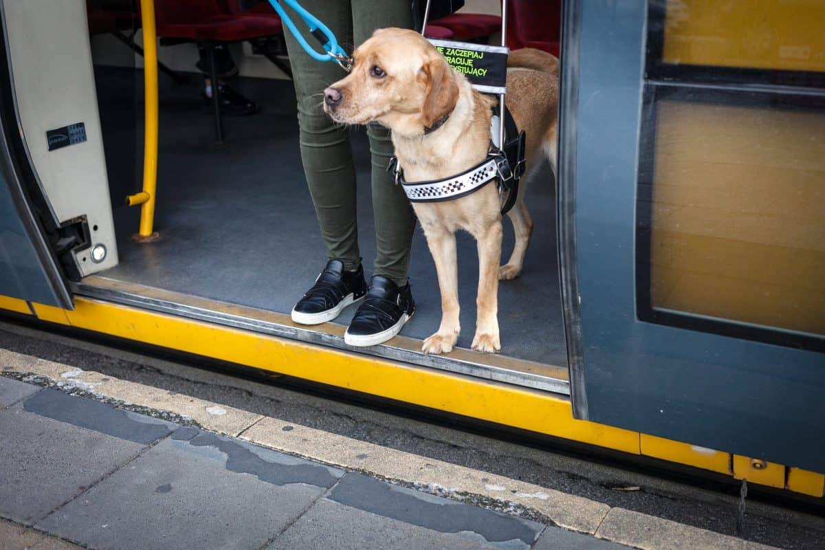 Czego pies się uczy podczas szkolenia profesjonalnego?