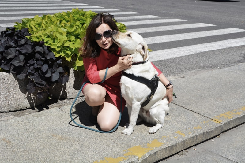 Przekazanie psa przewodnika osobie niewidomej to proces.